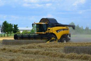 В КЧР выросла урожайность зерновых